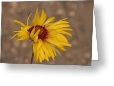 Windy Flower Greeting Card