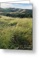 Wine Country Hills Greeting Card