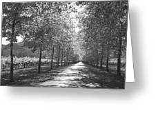 Wine Country Napa Black And White Greeting Card by Suzanne Gaff