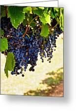 Wine Grapes Greeting Card by Kristina Deane