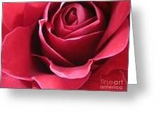 Wine Rose 6 Greeting Card