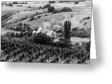 Wine Yard Greeting Card