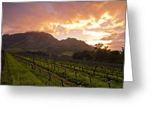 Wineland Sunrise Greeting Card by Aaron Bedell
