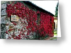Winery Ivy Greeting Card