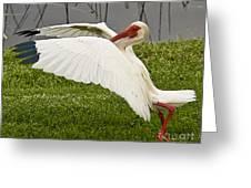 Wing Breaks Greeting Card