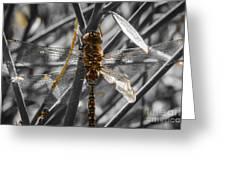 Wing Damage Greeting Card