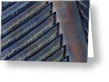 Wing Feather Detail Of Swallow Sem Greeting Card