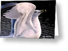 Wing Flex Greeting Card