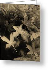 Wing Of Angels Sepia Tone Greeting Card