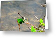 Winged Critter Greeting Card