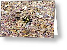 Winged Trio Greeting Card