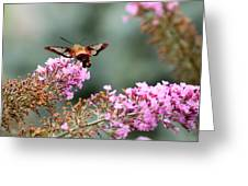 Wings In The Flowers Greeting Card