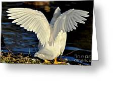 Wings Of A White Duck Greeting Card