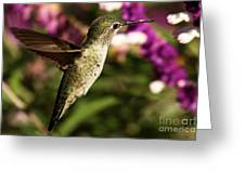 Wings Out Of The Way Greeting Card