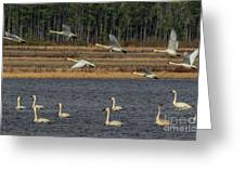 Wings Over Water 2 Greeting Card
