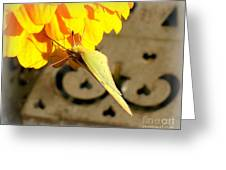 Wings Together Proboscis Out Greeting Card