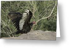 Wings Up Greeting Card