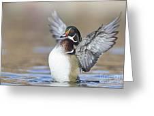 Wings Up Shoot Greeting Card
