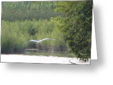 Wings Wide Open Great Blue Heron Mighty Sight Greeting Card