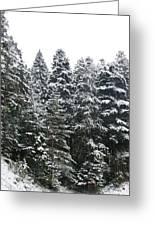 Winter 2 Greeting Card by Sonya Ragyovska