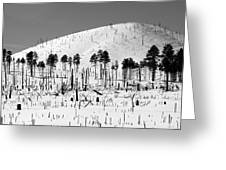 Winter After Fire-san Francisco Peaks Greeting Card