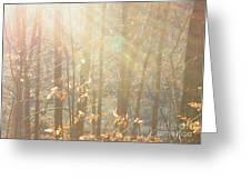 Winter Arbor Light Greeting Card