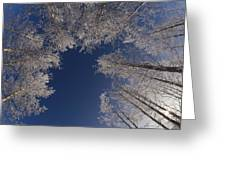 Winter Aspen Canopy Yellowstone Greeting Card