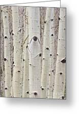 Winter Aspen Tree Forest Portrait Greeting Card