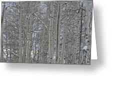 Winter Aspens Greeting Card