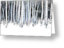 Winter Aspens  Greeting Card