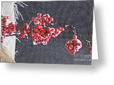 Winter Berries II Greeting Card
