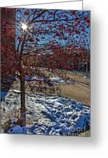 Winter Berries Greeting Card by Baywest Imaging