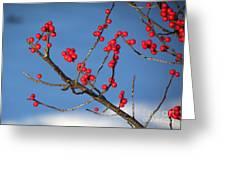 Winter Berries Greeting Card