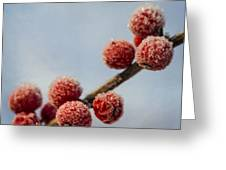 Winter Berries Greeting Card