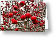 Winter Berryscape Greeting Card