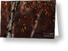 Winter Birch Greeting Card