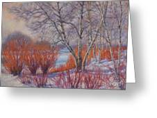 Winter Birches And Red Willows 1 Greeting Card
