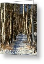 Winter Birches Greeting Card