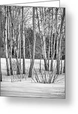 Winter Birches Greeting Card