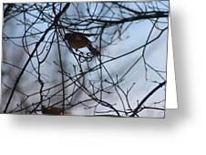 Winter Birds 2 Greeting Card