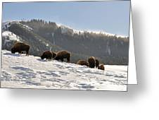 Winter Bison Herd In Yellowstone Greeting Card
