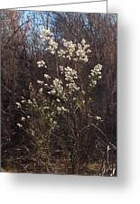 Winter Blossoms Greeting Card