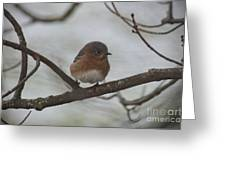 Winter Blue Bird 1 Greeting Card