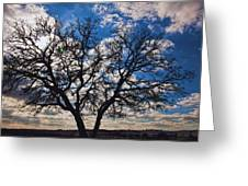 Winter Blue Skys Greeting Card