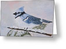 Winter Bluejay Greeting Card