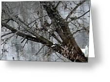 Winter Branch Greeting Card