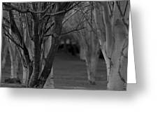 Winter Branches 1 Greeting Card
