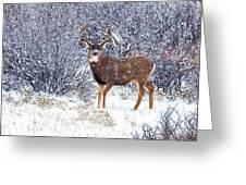 Winter Buck Greeting Card by Darren  White