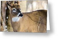 Winter Buck Greeting Card by Steven Santamour