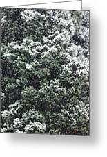 Winter Bush Greeting Card